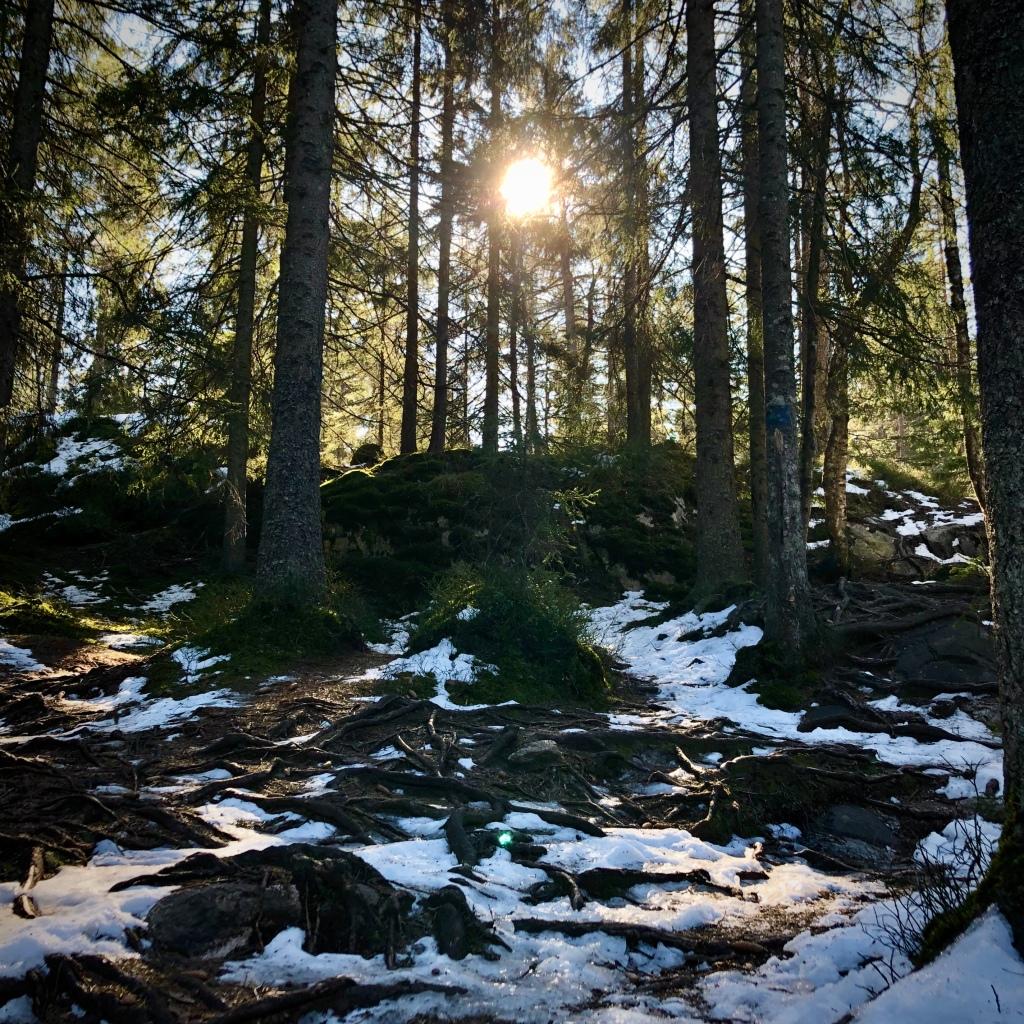 Mye snø igjen i skogen.